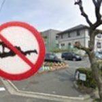 【クワガタ】淡路島の昆虫【タガメ】1匹目