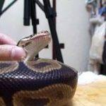 【アンチ】両生類、爬虫類について語る【帰れ】