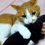 ★猫の面白い虐待の仕方語ろう80★