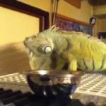 【トカゲ】爬虫類のスレ【カナヘビ】
