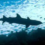 ヌルマンチョ司令官「中国人をサメの餌に」 →さすがに怒られる