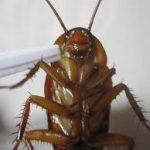 ●●人類はいかにして昆虫と関係すべきか?●●