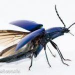 愛知の昆虫店について語るスレ