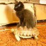 【カメ】イノチノスレ3【ネコ】