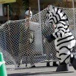 キモヲタを捕獲して動物園に売り飛ばすスレ