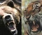 【衝撃】ヒグマはシベリアトラの餌【事実】