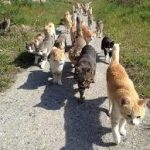 ウォーキングしてる時に見つけた猫の数を書くスレ2