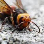 【カブト、クワガタ】国内最強昆虫は?2【タガメ、ゴミムシ】