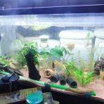 熱帯魚の餌スレ5