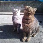 【野良猫】猫に山盛り餌やり部【地域猫】