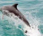 動物園・水族館イルカ巡り会員資格停止