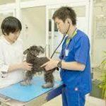 【犬猫】名古屋・愛知の動物病院【情報】その1