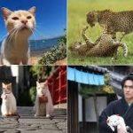 【犬と猫のテレビ番組情報!!】5
