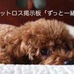 【★】ペットが亡くなった時27【ペットロス★】