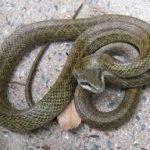 家の中に蛇がおった