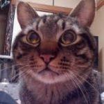 猫ワイ「ミャー……???」お前の首元ですりすり