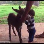 涙腺崩壊…家畜やペット、動物との別れ
