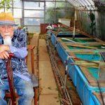 【埼玉】緑色の金魚、97歳「仙人」が繁殖成功 決意から40年[08/22]