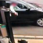 【悲報】猫をエアガンで撃っただけの男性が書類送検される 「引っかかれた仕返しに」