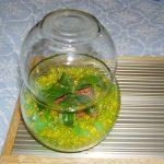 【食虫植物】ネペンテスウツボカズラPart9