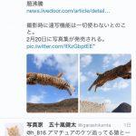 【飛び猫】五十嵐健太【フクとマリモ】Part.3