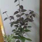 ●●【疑問】観葉植物総合12【トラブル】●●