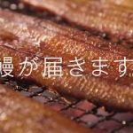 【鹿児島】野沢雅子、芸歴78年目で「養殖うなぎ」の声に初挑戦[06/29]