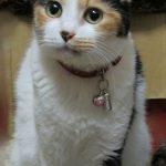 黄金の猫/スガシ課長