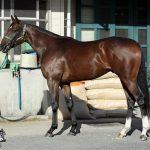 ●【急募】和田さんにG2勝たせられる馬