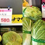 【経済】野菜高騰、ハクサイ2倍=鍋の季節に家計圧迫―農水省★2