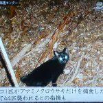 【悲報】猫キチは多いのに犬キチは少ない理由が判明して話題に[694652279]