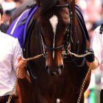 インスタ映えする馬