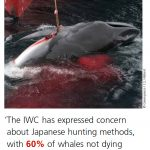 【社会】反捕鯨の本拠地の英国で「ビハインド・ザ・コーヴ」が最優秀監督賞を受賞した理由★3