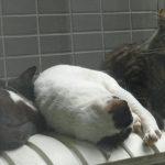 猫「いちばんおねだりしやすいハードをおしえろ」2台目